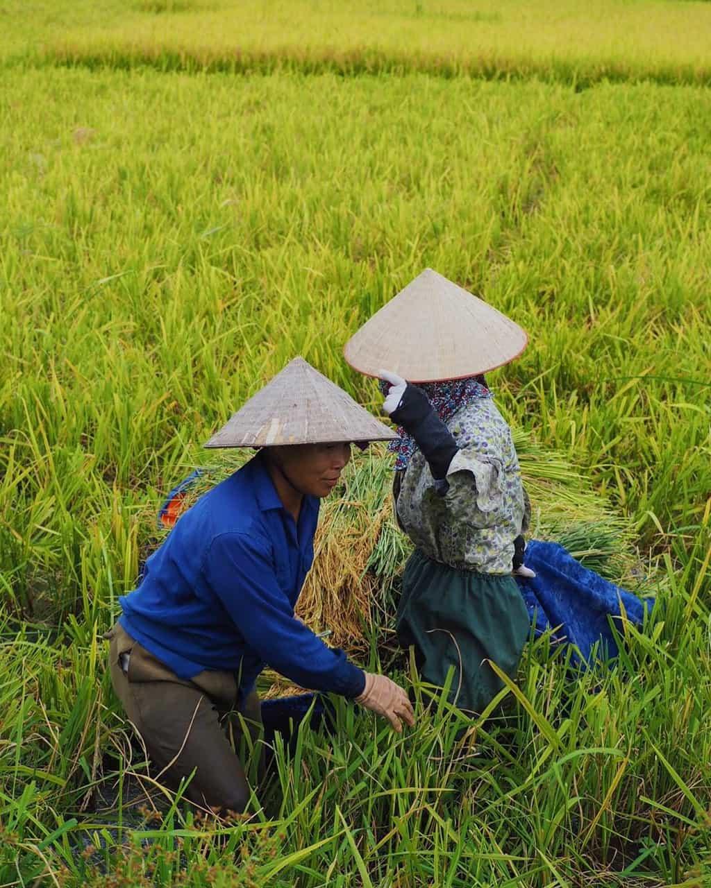 Vietnamese peole are hard working