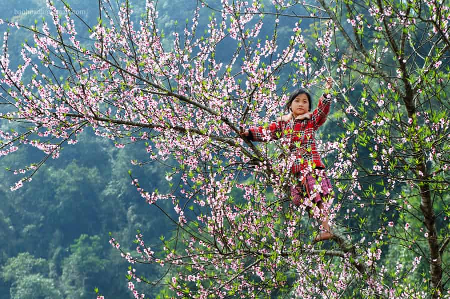 Moc Chau vietnam in December