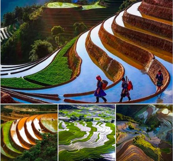 Mu Cang Chai Falling Season - Vietnam in April